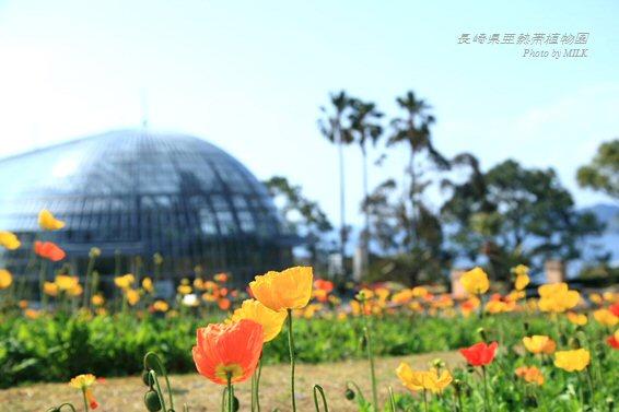 長崎県亜熱帯植物園閉園10.jpg