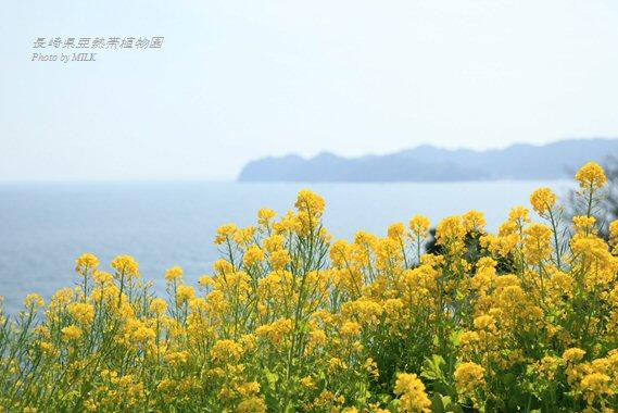 長崎県亜熱帯植物園閉園5.jpg