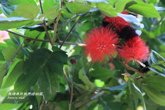 長崎県亜熱帯植物園閉園8.jpg
