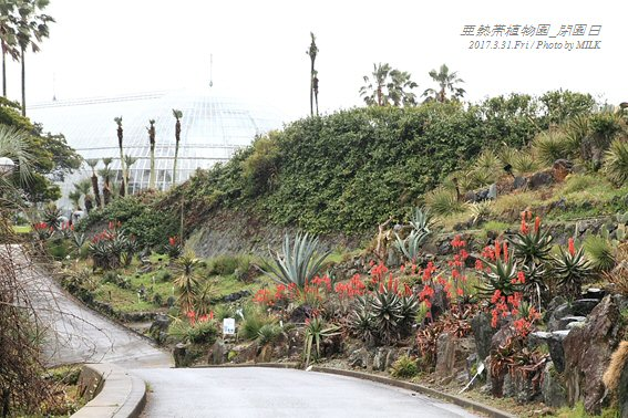 長崎県亜熱帯植物園閉園日4.jpg